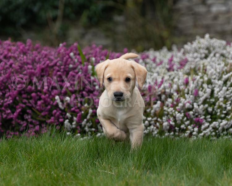 Weika Puppies 24 March 2019-8630.jpg