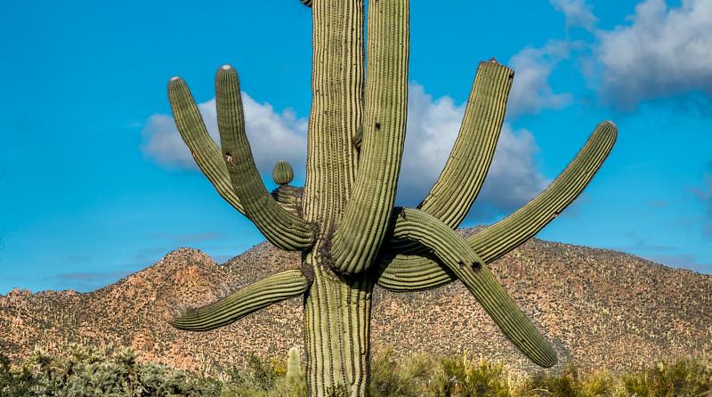 I-11 - Unusual Sonora North of Tortoise Trail #3