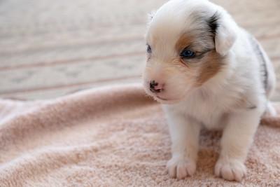 2019-09-01 Foxpointe Puppy 7