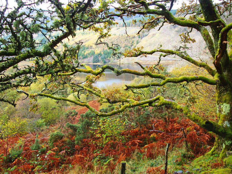 Llyn Crafnant became visible through the trees.
