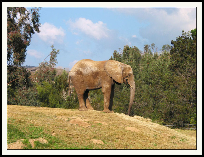 Elephant  Wild Animal Park.jpg