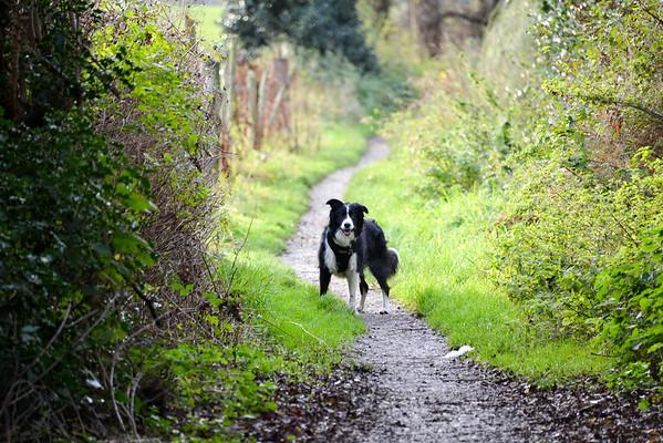 Walking Molly round Jack Lane