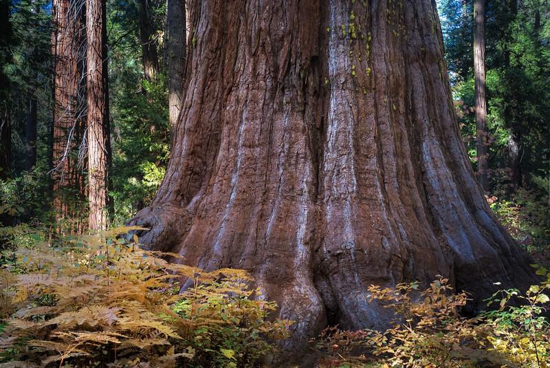 The Paw Tree
