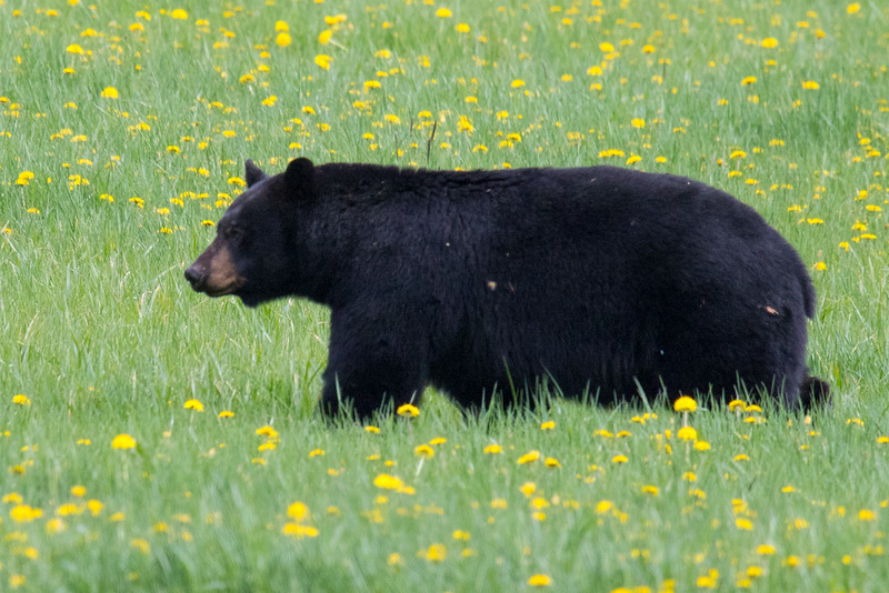 BC Bears Spring 2019-1.jpg