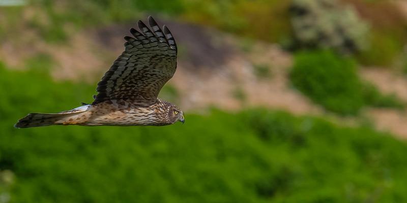 HNBH Birds1-48.jpg
