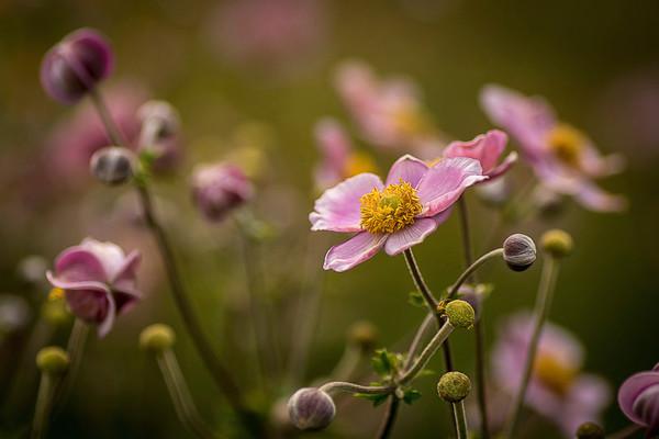 Flowers, Garden, Yard, Nature, Outdoors