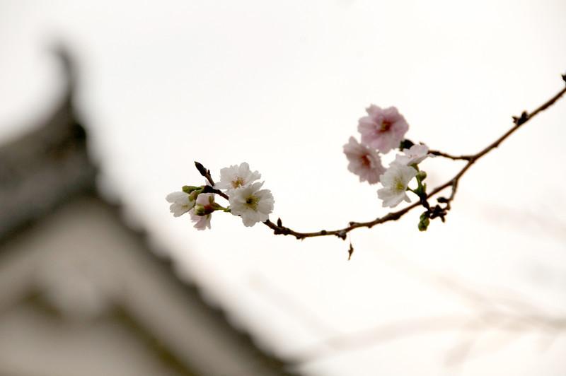 Japan_2010_NAT0869.jpg