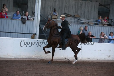 61. Adult 3 Gaited Country Pleasure Champ