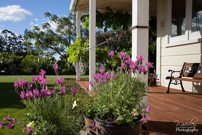 Carters Garden