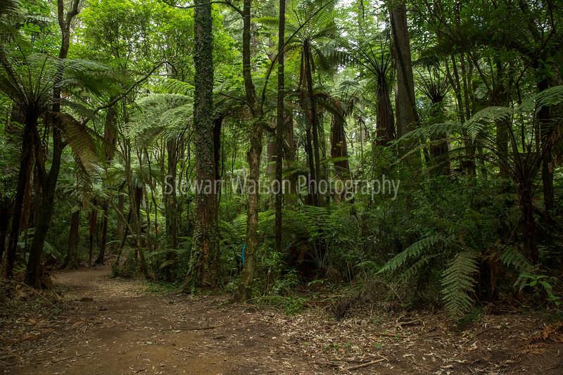 Rotorua native Bush