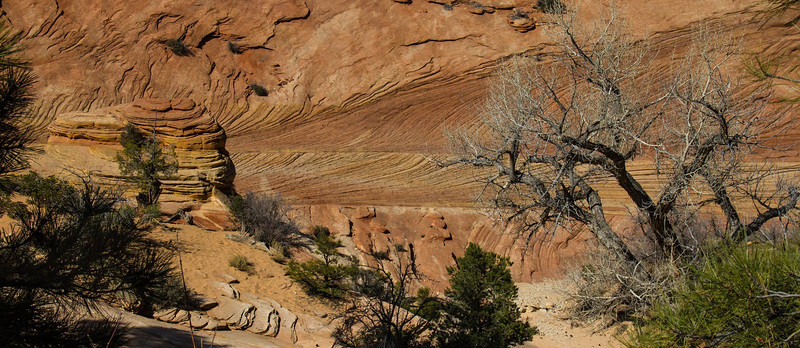 Strata layers in Zion National Park show as much character as anywhere in Utah. Along the East Portal access road.
