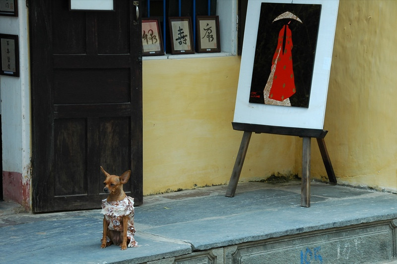 Dog in a Dress - Hoi An, Vietnam