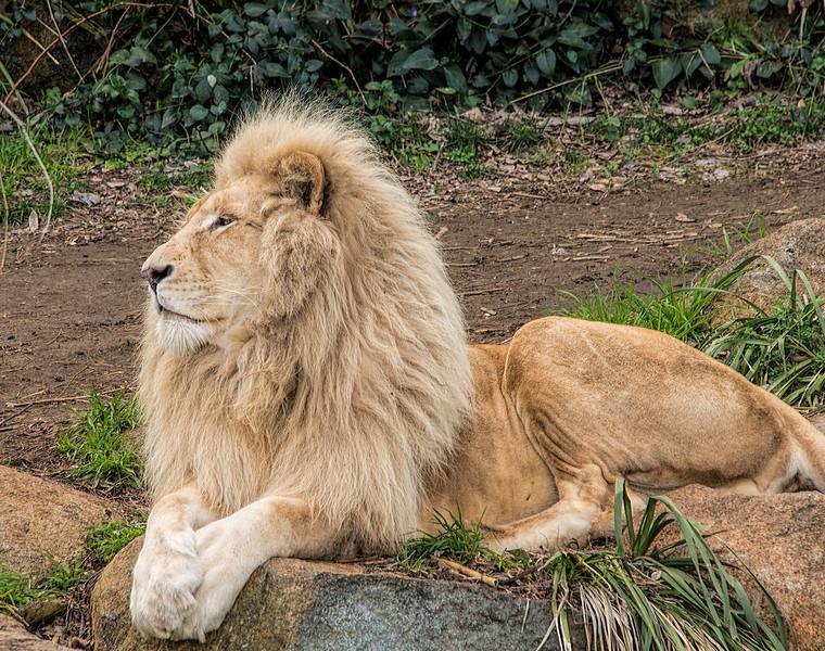 Image-In Jamala, Canberra's National Zoo & Aquarium