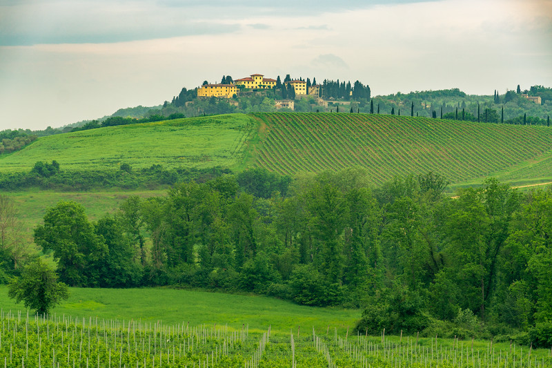 Chianti Region Vineyard