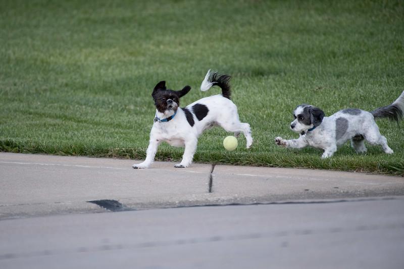 LuLu - Brady - Cooper Play Friends (36 of 109).jpg