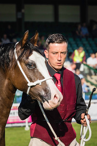 Royal Welsh Show 2017 -  Tuesday