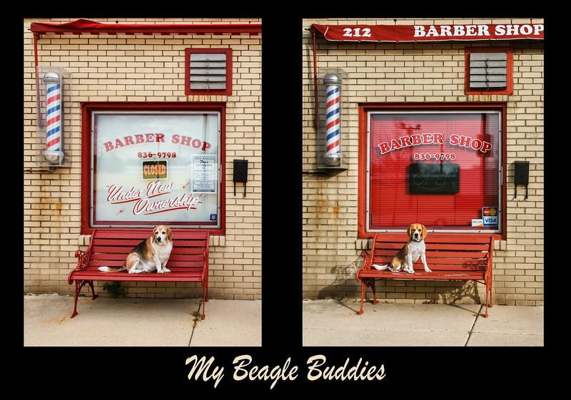 My Beagle Boys