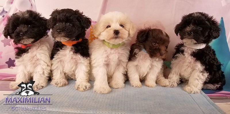 Mystic Pups 011.jpg