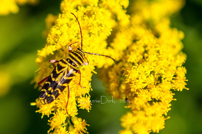 Arachnids & Insects ~ Nature's Helpers
