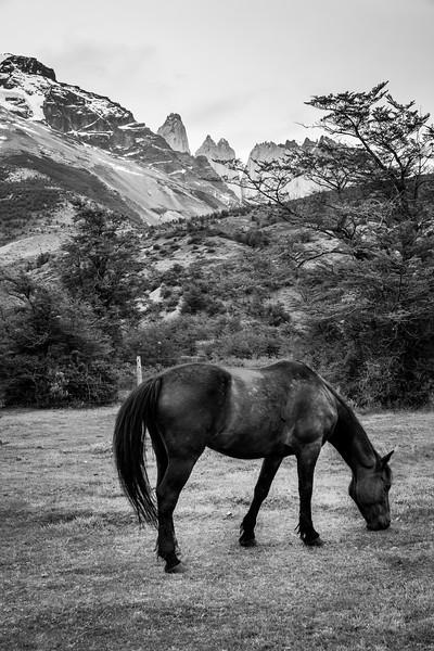 Patagonia-28.jpg