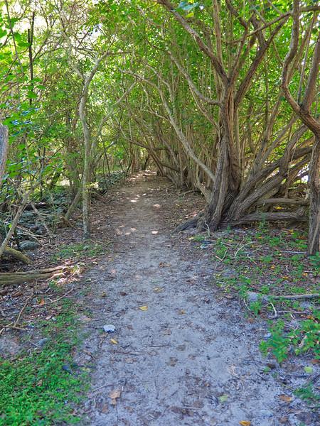 Path Around Waterlemon Bay, St John