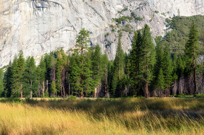 Yosemite Treeline-.jpg