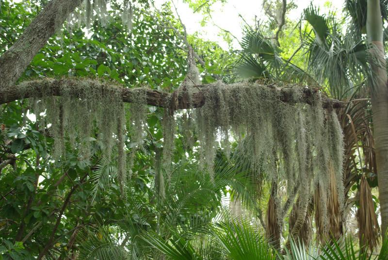 McKee Botanical Garden015.JPG