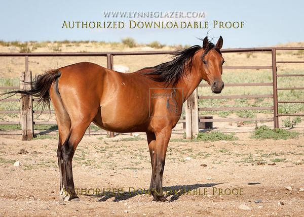 Desert38-2315.jpg