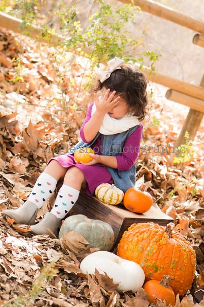 Bench: Fall Minis