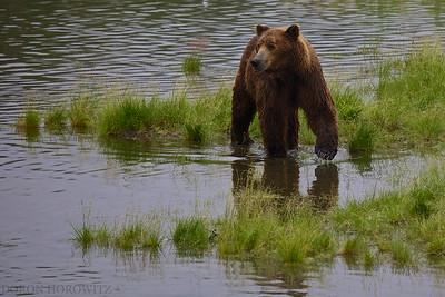 Alaska - Tanzania