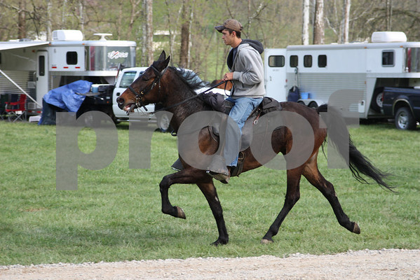 Single Foot Horse Association-Ivanhoe 2010