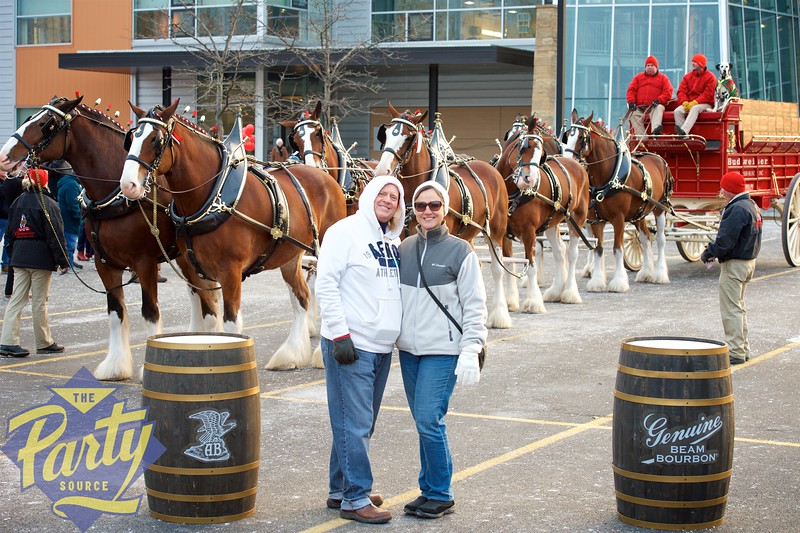 Clydesdale Portraits 115.jpg