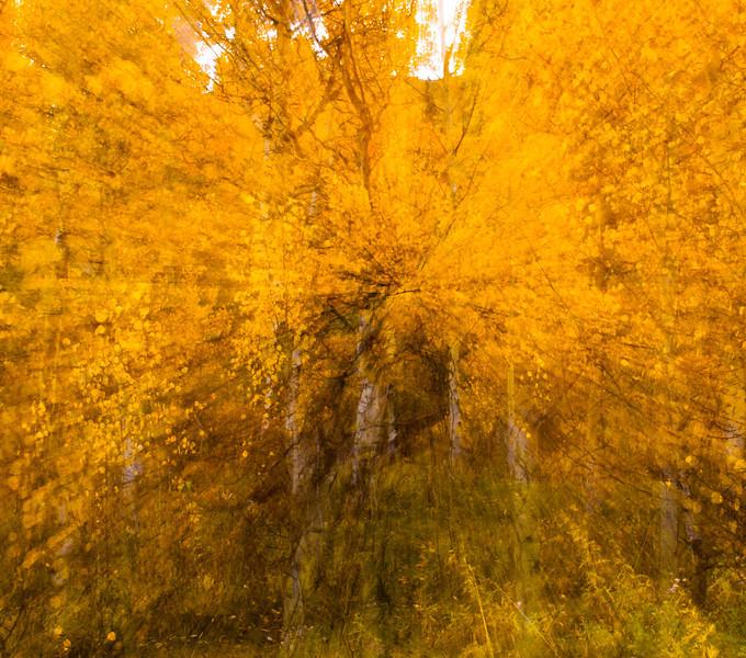 Fall Idaho-13.jpg