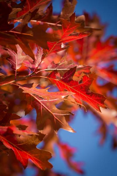 20151024-Fall Colors-83.jpg