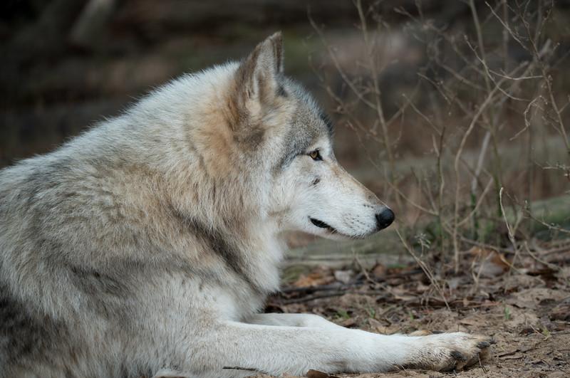 Seacrest Wolves_-66.jpg
