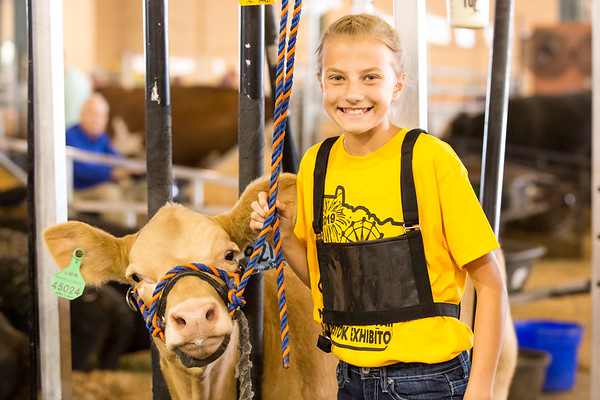 Claire at the Fair! {4-H Cattle Show}