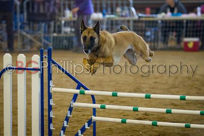 Dog Agility: Rancho Murieta 12/29/13