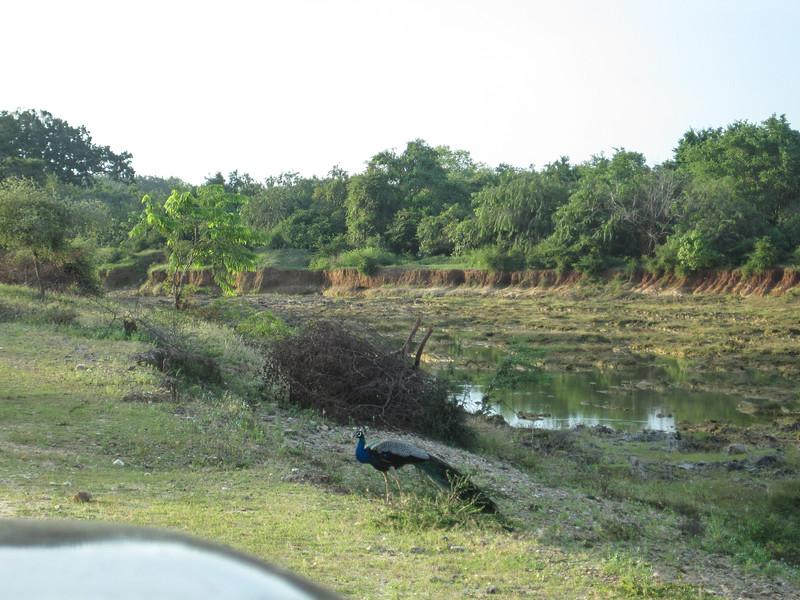 Sri_Lanka17-9543.jpg
