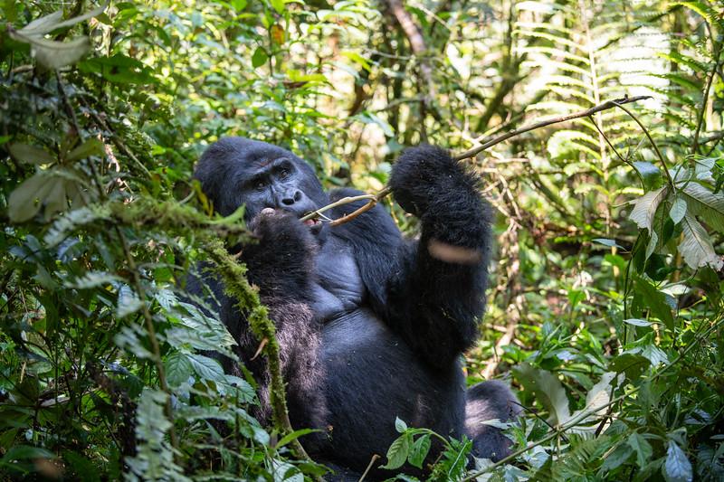 Uganda_T_Gor-438.jpg