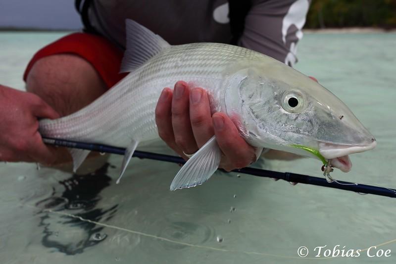 Tahiti (Anaa) (24).JPG