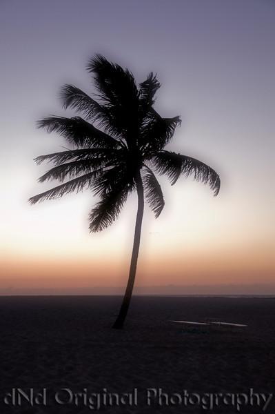 066 Bahamas 2008 Last Evening Sunset - Lone Palm Tree (autofx1).jpg