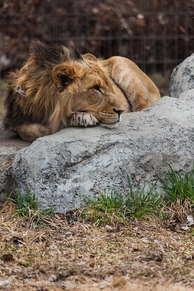 zoo_Apr_2013-12.jpg