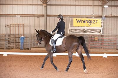 Horse 154