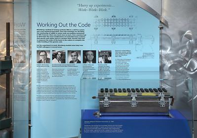 the Nirenberg exhibit at NIH Clinical Center