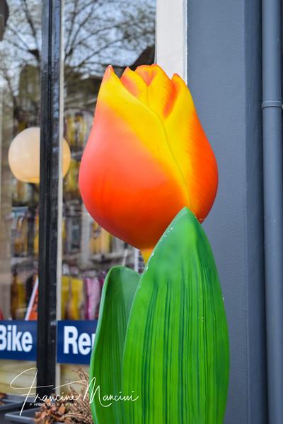 Amsterdam (712 of 845).jpg