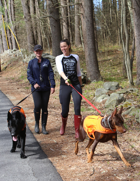 Walking big dogs in Dunstable 050220