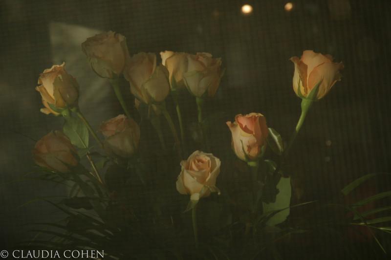 Mystery Roses.jpg