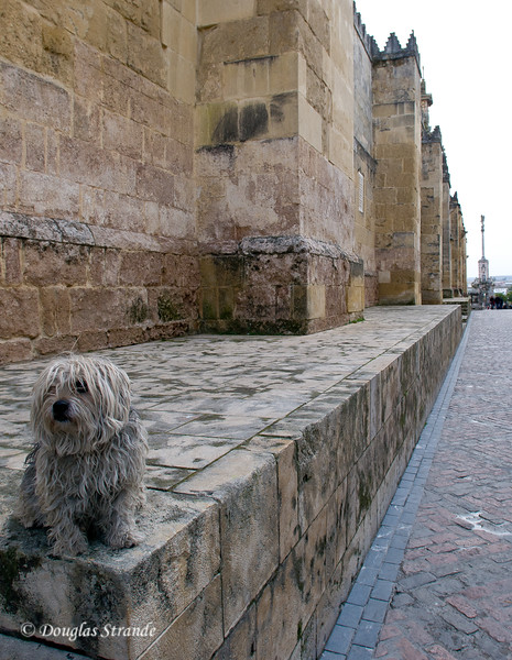 Thur 3/10 in Cordoba: Patiently waiting