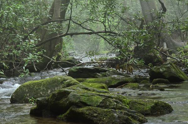 Raven Cliff Falls Trail 5/11/13