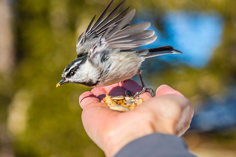 WEB-FEATURE-Chicadee-ridge-Paul-Hamill-673A1416.jpg